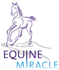 Equine Miracle